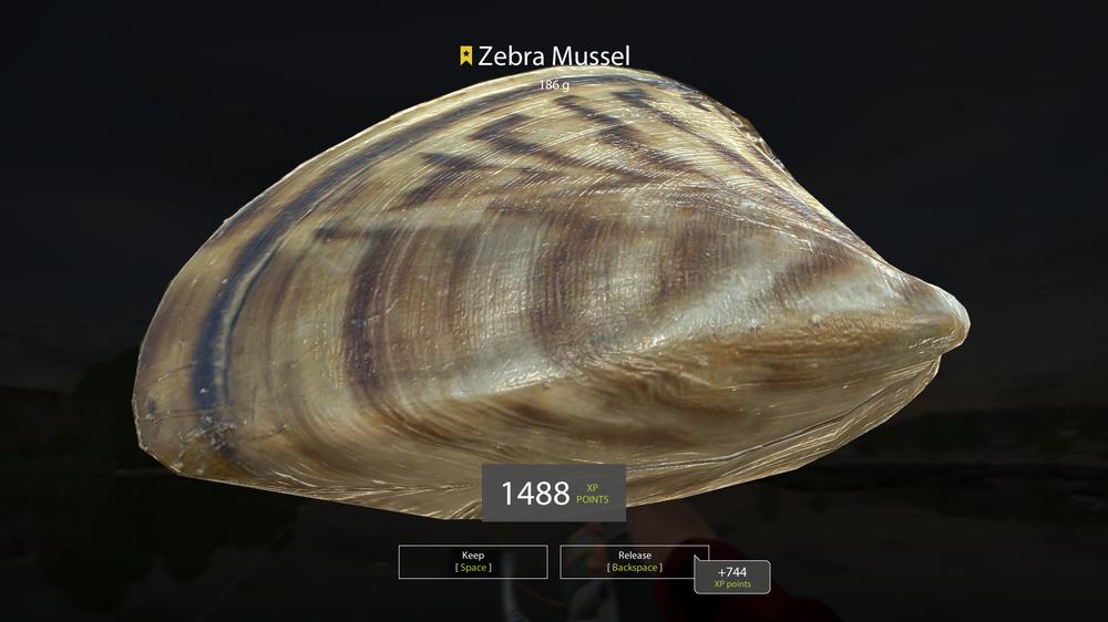 ZebraT.png