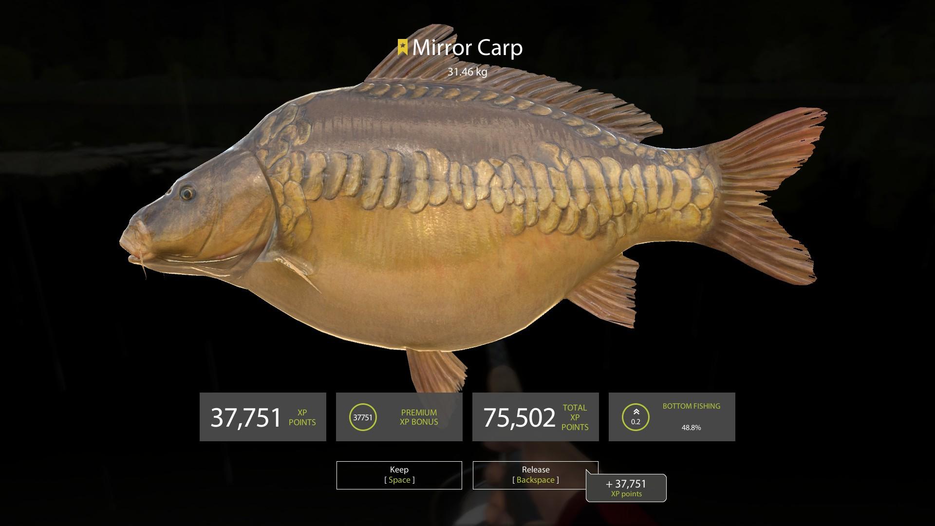 Mirror carp is a true Russian fish. Benefits, recipes 41