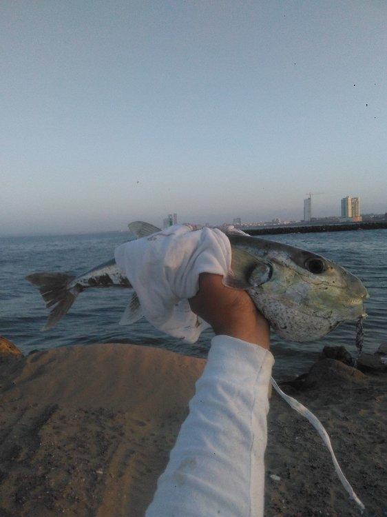 1er pez conejo-1.600 kgrs.jpg