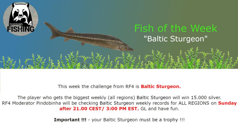 BalticSturgeonWeekly.thumb.png.f382f69994754cb42f71b88df74cc2d5.png