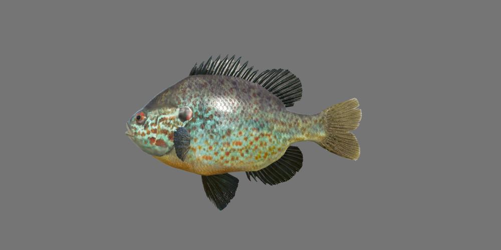 pumps_sunfish.thumb.png.62dc55a97ac503adbbfba7265c62a1f9.png