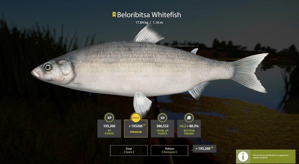 whitefish 17.8kg.JPG