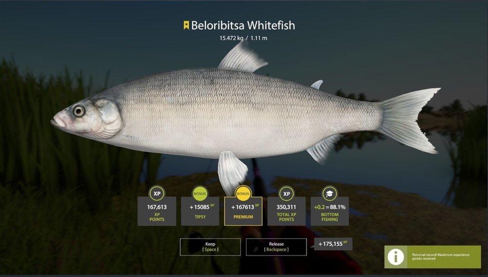 whitefish.thumb.JPG.2bc002024b045c1ebe4de33e265a12c8.JPG