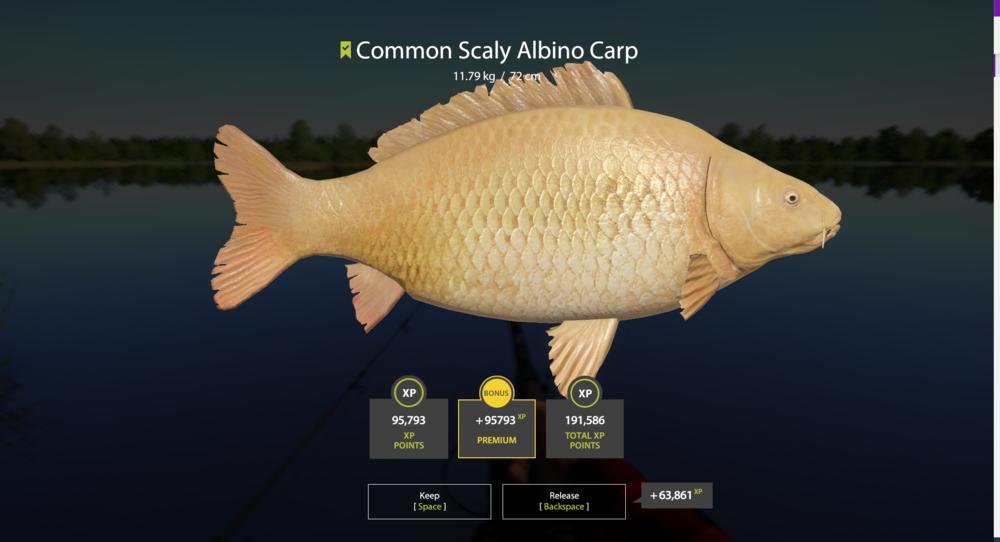 Common Scaly Albino Carp.png