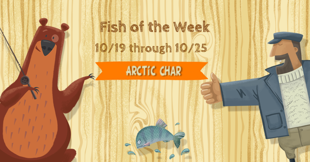 arcticcharFOTW.thumb.png.1bac5b3460a164d1c02c69e08cbb8f8a.png