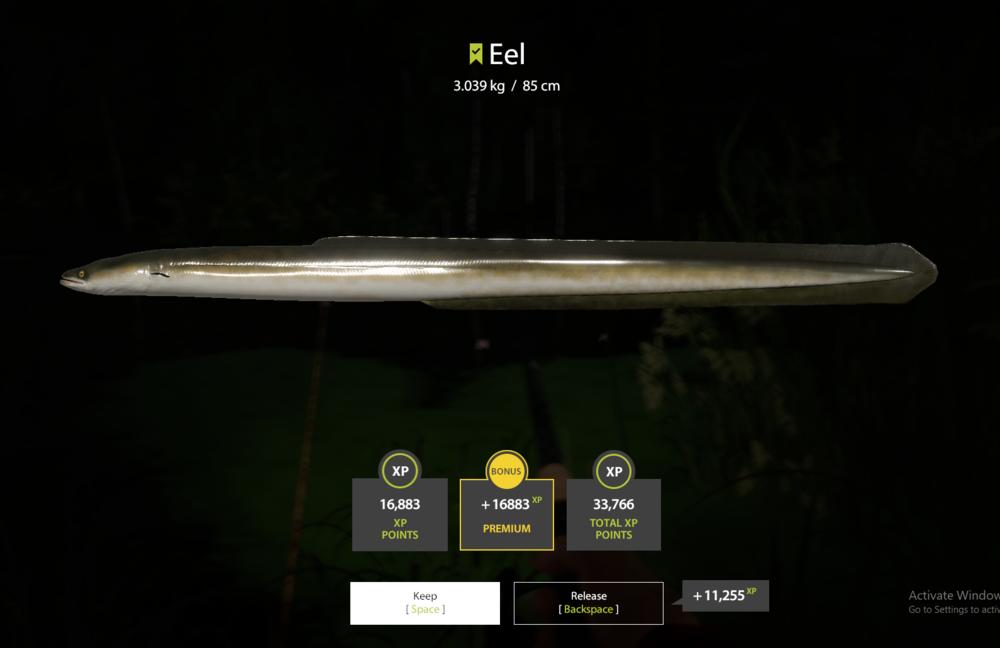 Eel1.png